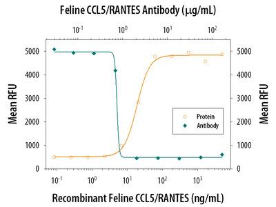 CCL5 /RANTES Antibody
