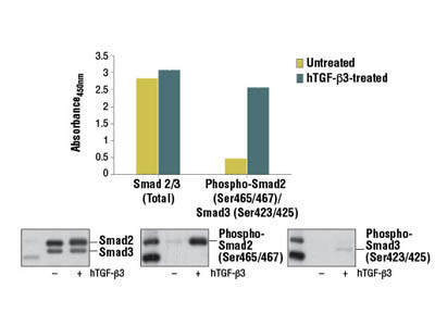 PathScan ® Phospho-Smad2 (Ser465/467)/Smad3 (Ser423/425) Sandwich ELISA Kit