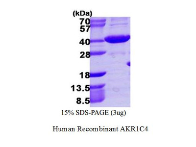 Human Recombinant AKR1C4