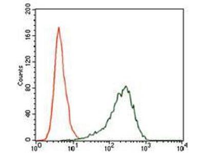 anti-SRY (sex determining region Y) antibody