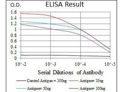 anti-CEBPA antibody