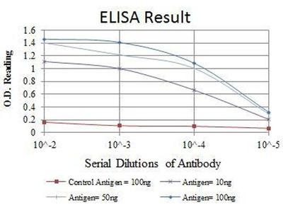 anti-MYC antibody