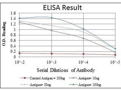 anti-JUP (junction plakoglobin) antibody