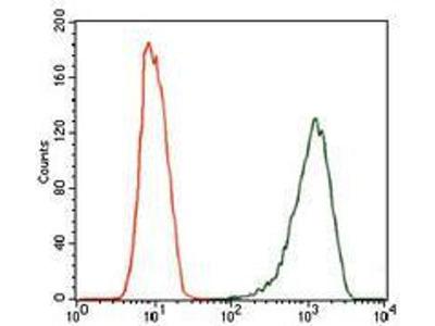 anti-NOS2 antibody