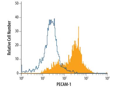 CD31 /PECAM-1 Antibody