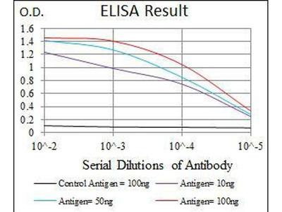 anti-ALPL antibody