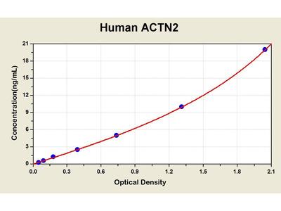 Actinin, alpha 2 ELISA Kit