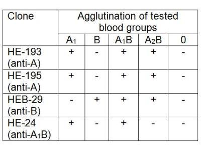 ABO, Blood Group A1B antigen Antibody (HE-24)