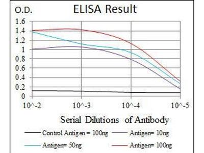 anti-Casein Kinase 2, alpha Prime Polypeptide (CSNK2A2) (AA 194-350) antibody