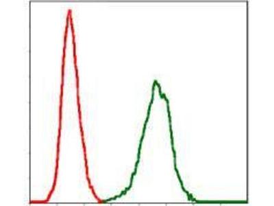 anti-SERPINE1 (PAI-1) antibody