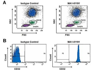 CD32 Monoclonal Antibody (AT10)