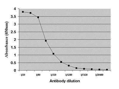 Rat Albumin Polyclonal Antibody
