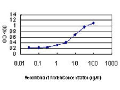 anti-GDP Dissociation Inhibitor 1 (GDI1) (AA 1-448) antibody