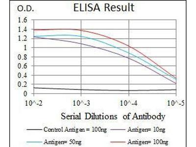 anti-HSF4 antibody