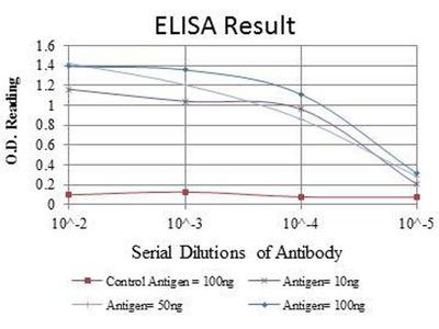 anti-IRAK4 antibody