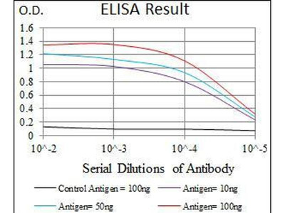 anti-SCGB1A1 (Rup2) antibody