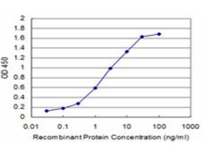 anti-Choroideremia-Like (Rab Escort Protein 2) (CHML) (AA 68-178) antibody