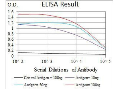anti-E2F1 (E2f) antibody