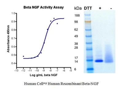 Human CellExp™ Beta-NGF, Human Recombinant