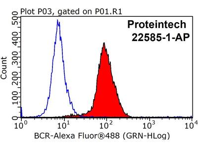BCR antibody