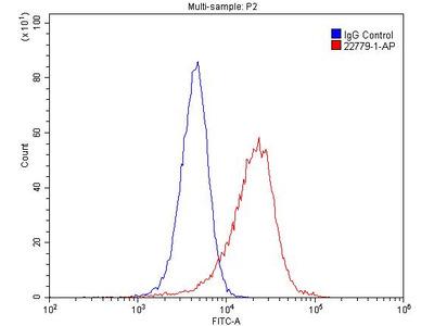 LIFR antibody