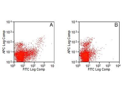 RAT ANTI MOUSE CD283:FITC