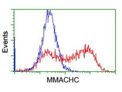 MMACHC Monoclonal Antibody