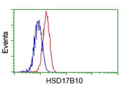 HSD17B10 / HADH2 Monoclonal Antibody