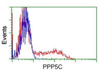 PPP5C Monoclonal Antibody