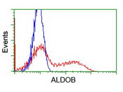 ALDOB Monoclonal Antibody