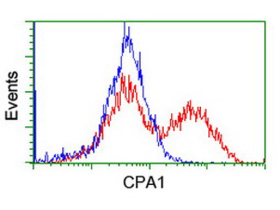 CPA1 / Carboxypeptidase A Monoclonal Antibody