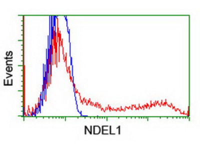 NUDEL / NDEL1 Monoclonal Antibody