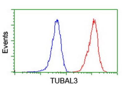 TUBAL3 Monoclonal Antibody
