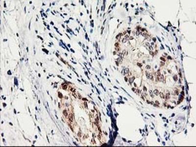 PRMT2 Monoclonal Antibody