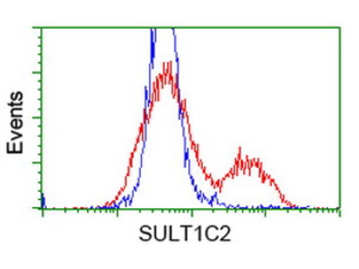SULT1C2 / Sulfotransferase 1C2 Monoclonal Antibody