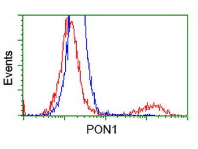 PON1 / ESA Monoclonal Antibody