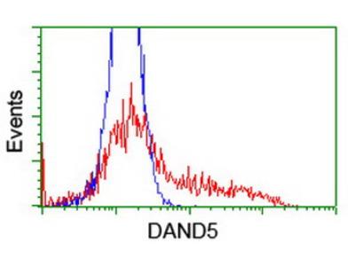 DAND5 Monoclonal Antibody
