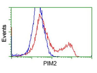 PIM2 / Pim-2 Monoclonal Antibody