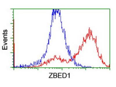 ZBED1 / TRAMP Monoclonal Antibody