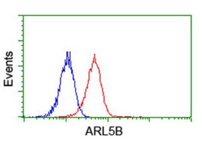 ARL8 / ARL5B Monoclonal Antibody