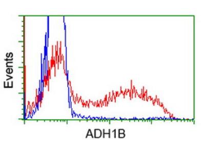 ADH2 / ADH1B Monoclonal Antibody