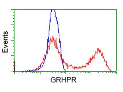 GRHPR / Glyoxylate Reductase Monoclonal Antibody