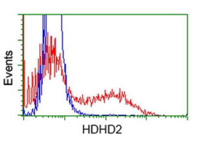 HDHD2 Monoclonal Antibody