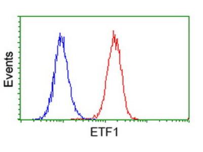 ETF1 / ERF1 Monoclonal Antibody