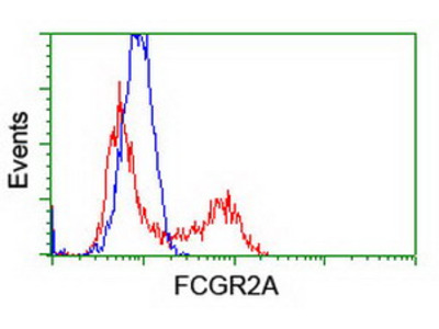 FCGR2 / CD32 Monoclonal Antibody
