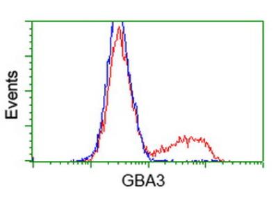 GBA3 / CBG Monoclonal Antibody