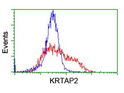 KRTAP2-4 Monoclonal Antibody