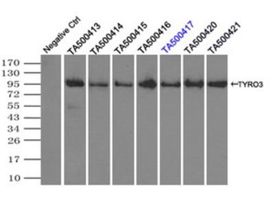TYRO3 Monoclonal Antibody