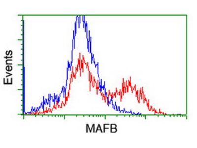 MAFB Monoclonal Antibody