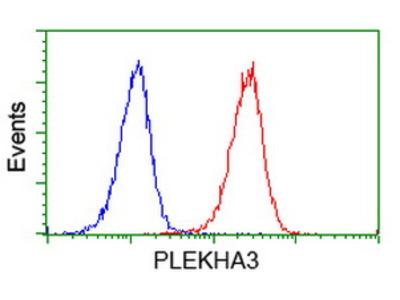 PLEKHA3 Monoclonal Antibody
